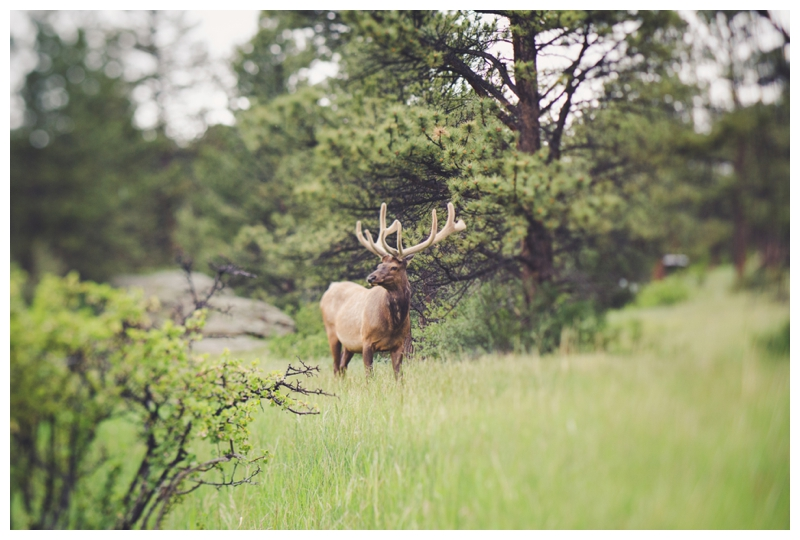 Northern Colorado Photographer
