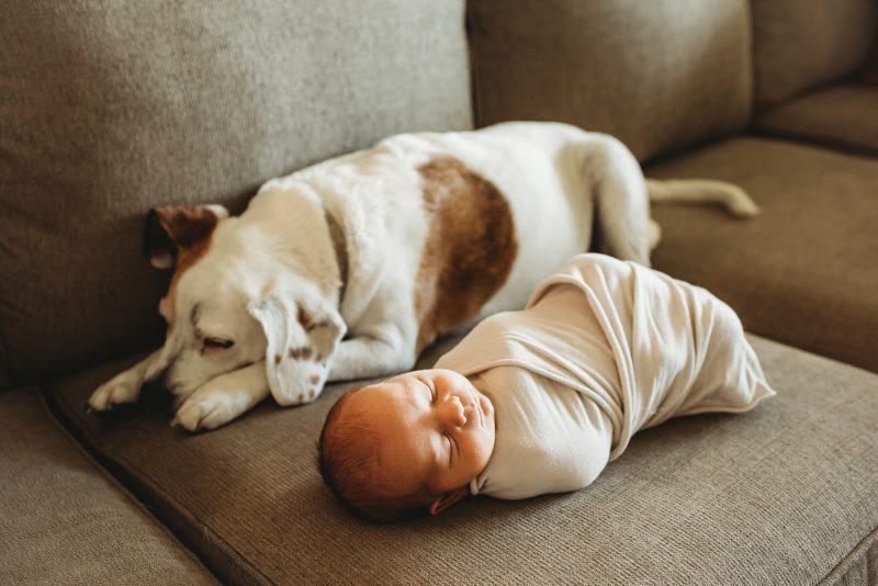 Newborn boy and sleeping puppy